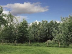 Alberi piantati da E.ON