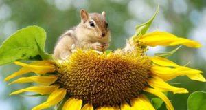 Biodiversità a rischio, la denuncia di Legambiente