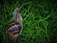 Biodiversità, più ricca nelle città meno inquinate