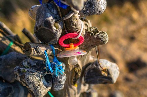 Plastica nel mar Tirreno, Greenpeace lancia allarme