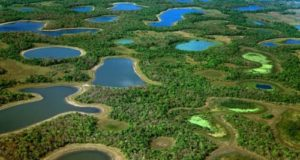 Il Pantanal a rischio per accordo Ue-Mercosur