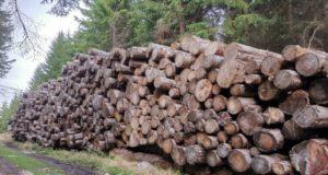 Fiemme punta sui servizi forestali naturali