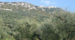 Raccolta delle olive, annata pessima