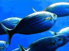 Pesce prezioso nutriente