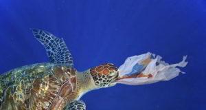 Tartarughe marine sentinelle contro l'inquinamento